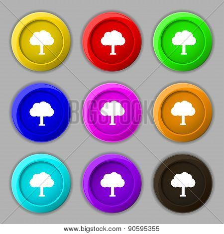 Tree, Forest Icon Sign. Symbol On Nine Round Colourful Buttons. Vector