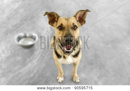 Dog And Bowl