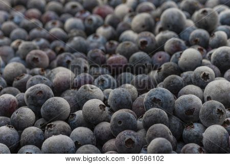 Organic Florida blueberries fresh farm picked natural healthy fruit produce frozen cold background macro
