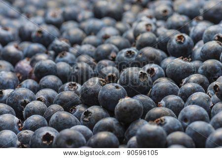 Organic Florida blueberries fresh farm picked natural healthy fruit produce background macro