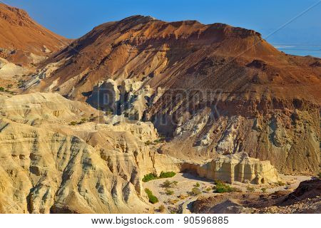 The picturesque canyon in the rocky desert near the Dead Sea. Edge of the canyon are composed of sandstone of various shades of beige and brown colors. At the bottom of the canyon trees