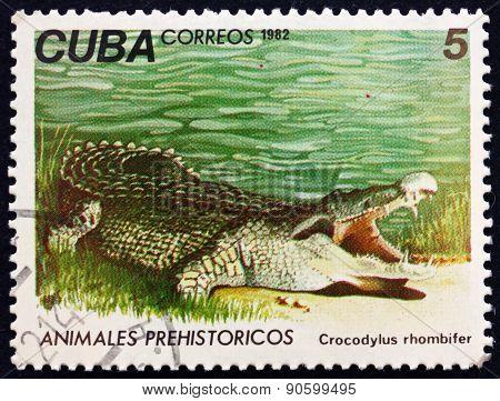 Postage Stamp Cuba 1982 Cuban Crocodile, Reptile