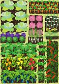 stock photo of vegetables  - Overhead view on vegetable garden with different vegetables - JPG
