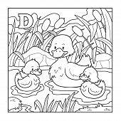 image of duck  - Coloring book  - JPG