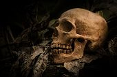 ������, ������: Skull And Nature