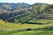 stock photo of pastures  - Green vibrant pasture in Transylvania Romania at summer - JPG