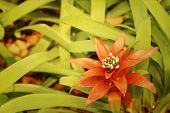 stock photo of bromeliad  - Bromeliad flowers in garden at the park - JPG