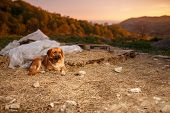 picture of manger  - Mixed Breed Ginger Dog  Lies on Manger at Evening light  - JPG