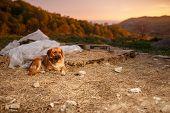 image of manger  - Mixed Breed Ginger Dog  Lies on Manger at Evening light  - JPG