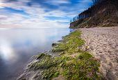 stock photo of green algae  - Baltic shore - JPG