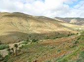 picture of atlantic ocean  - Agriculture on terraces in the green valley of Vega de Rio Palmas on the Canary Island Fuerteventura - JPG