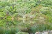 picture of fynbos  - Lake surrounded by indigenous plants on a farm near Stellenbosch - JPG