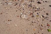 pic of jellyfish  - Wet sand background with a small jellyfish - JPG