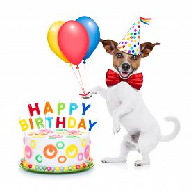 stock photo of birthday hat  - jack russell dog as a surprise with happy birthday cake wearing red tie and party hat holding balloons isolated on white background - JPG