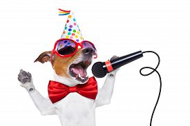 pic of birthday hat  - jack russell dog as a surprise singing birthday song like karaoke with microphone wearing red tie and party hat isolated on white background - JPG