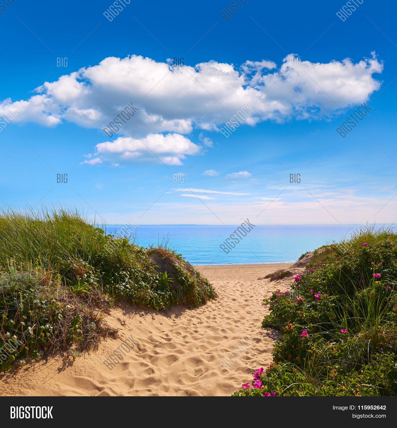 Cape cod herring cove beach image photo bigstock for Cove cape cod