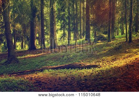 North scandinavian forest