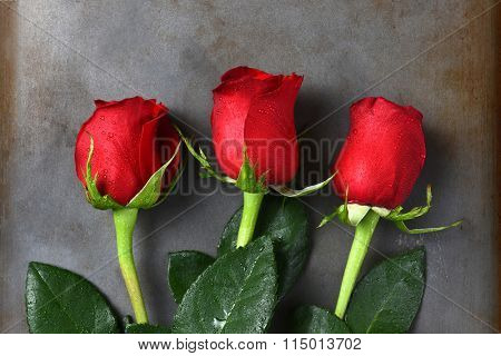 Three red rose buds on a dark gray metal surface. Closeup in horizontal format.