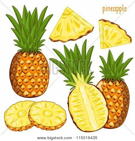 Pineapple Isolated, Vector.
