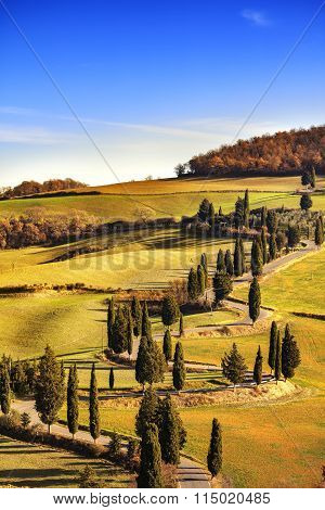 Cypress Tree Scenic Road In Monticchiello Near Siena, Tuscany, Italy.