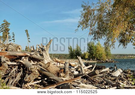 Logs And Driftwood On The Beach