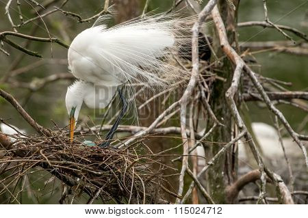 Egret standing over a nest