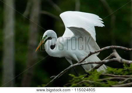 Egret sitting in the trees