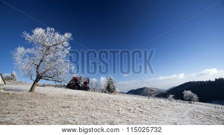 Winter rural landscape. Hoar-frost on trees
