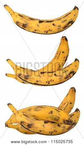 group of plantain banana isolated on white background