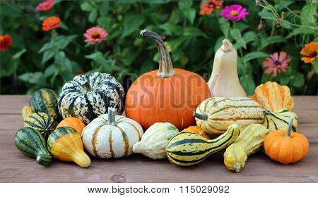 Squash Gourd