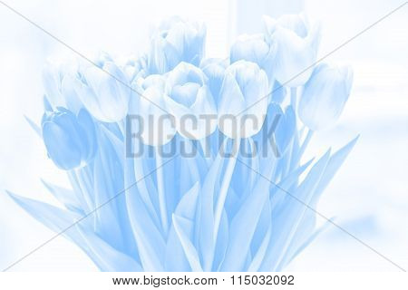 Beautiful Tulips, Light Blue Background For Greeting Cards And Text. A Bouquet Of Flowers For March
