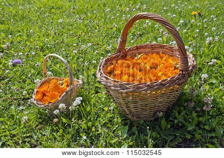 Two Wicker Baskets Full Of Calendula Blossoms In The Meadow