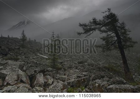 Gloomy valley, Altai mountains, Russia