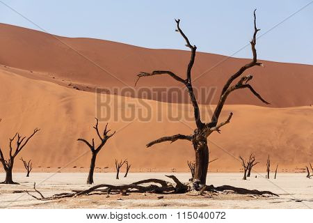 Sossusvlei Beautiful Landscape Of Death Valley