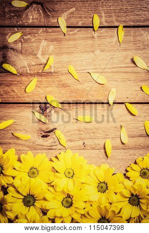 Fresh spring flowers and petals on rustic wood. Place for text on Valentine's Day, Mother's Day etc. Daisy flower