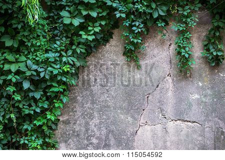 The Rocky Wall With Green Plant