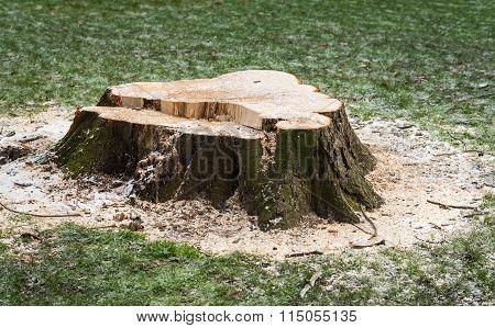 Stump Of A Felled Tree In A Grass Field