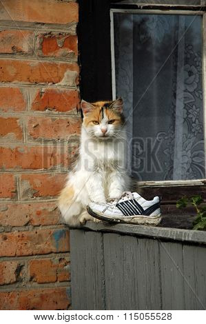 Cat is sitting on the wooden fence with old torn sneaker
