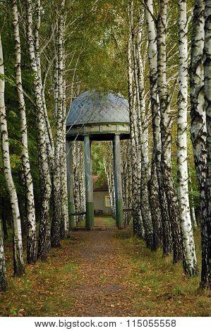 Alcove in birch grove