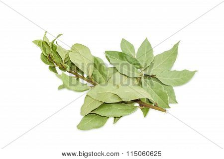 Branch Of A Bay Laurel And Several Dried Bay Leaves