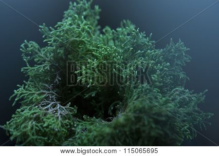 Selaginella Willdenowii In The House Decor (led Lighting)