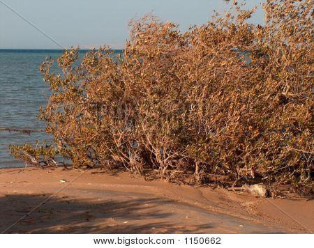 Mangrove am Meer