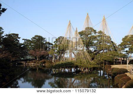 Karasaki pine in Kenroku-en (Japanese garden) Kanazawa Ishikawa Japan