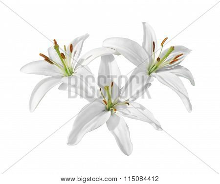 Lilies, Isolated On White Background