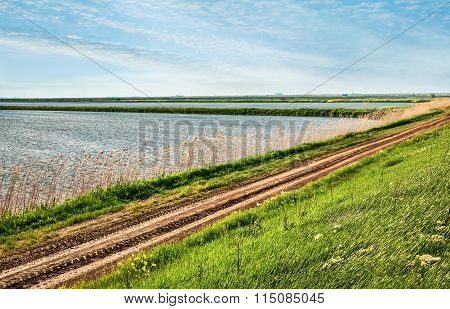 Rural Road Passing Through Rice Fields
