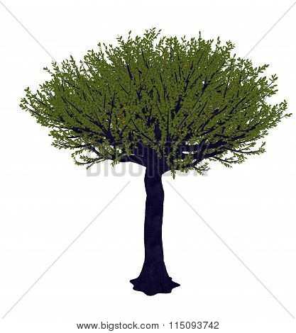 Forest sandpaper fig or tree, ficus exasperata - 3D render