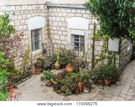 Israel. Courtyard and flowers