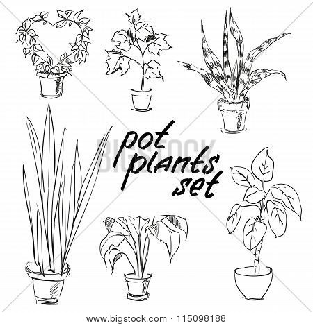 Pot Plants Set. Hand-drawn Design Elements