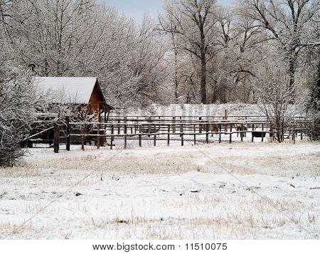Rural Barnyard in the snow
