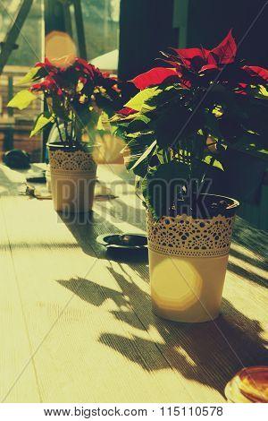 Flowers In Flowerpot Instagram Effect With Flare